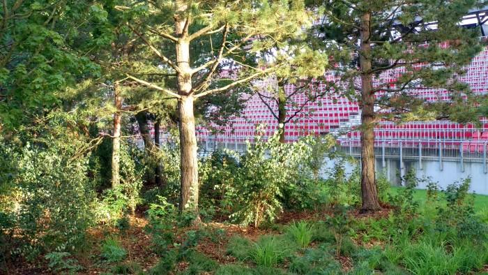 Detailansicht des Waldes